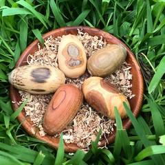 Toys of Wood - Natural Wooden Medium Egg