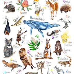 Australian Wildlife Kids Alphabet Print