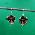 Genuine Callitris cone, copper plated, Australian Flora earrings