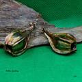 Genuine fuchsia gum nut earrings, Australian flora jewellery