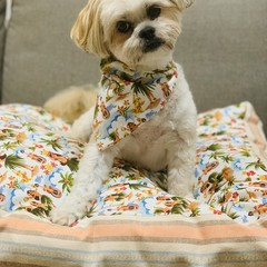 DOG BEDS- DESIGNER COTTON PRINTS