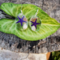 Ocean droplets - Real Starfish earrings, mermaid jewellery