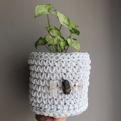 Crystal Plant Basket Medium