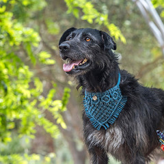 Metallic Macramé Dog Bandana