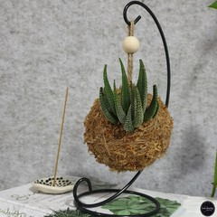 Succulent Kokedama on Stand