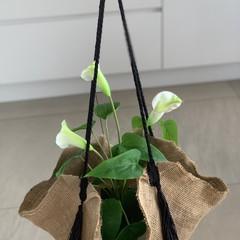 PLANT HANGERS - JUTE INDOOR / OUTDOOR
