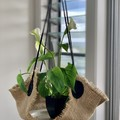 PLANT HANGERS - JUTE INDOOR / OUTDOOR