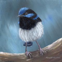 Superb Fairy Wren, Original bird painting, bird art, Australian wildlife bird,