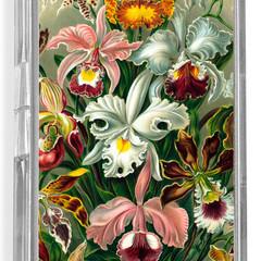 Ernst Haeckel's Illustrations - Flowers
