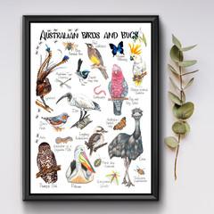 Australian Birds and Bugs Poster, Kids Wildlife Resource