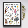 Australian Birds and Bugs Poster, Kids Wildlife Resource