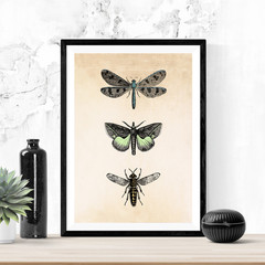 Insect Art, Bugs, Printable art, Instant digital download, Dragonfly