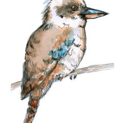 Kookaburra | Wildlife | Art Print | Watercolour Art | Australia