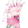 Galah | Art Print | Watercolour Art | Australian Bird | Australian Wildlife