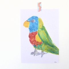 Flynn the Rainbow Lorikeet A4 Print | Junior Artist Art | FREE POST | Signed.