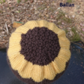 Sunflower small hat wool