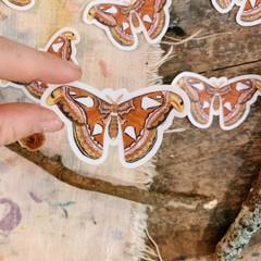 Watercolour Atlas Moth  Sticker
