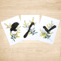 Set of 3 Willie Wagtail Art Prints size A5 of my water colour paintings