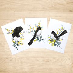 Set of 3 Willie Wagtail Australian Bird Art Prints Set of 3, Bird Art Print