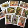 Male Superb Fairy-Wren  - Photographic Card