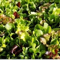 Summer Salad Mix 6pc Bag