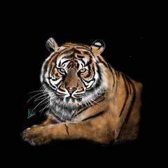 Custom Wild Animal Portraits