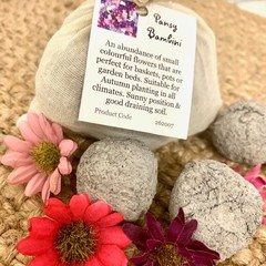 Pansy Bambini  6pc Seed Bomb Bag