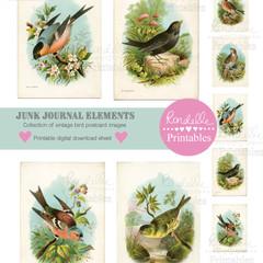 Junk Journal Vintage Bird Postcard Ephemera Instant Digital Download Collage