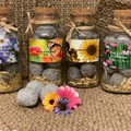 Ultimate Bee & Butterfly Garden Collection 4pc Jar set