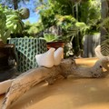 Driftwood table decoration