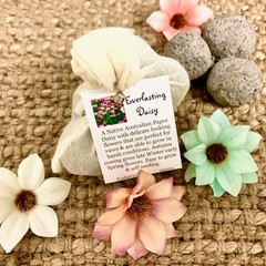 Native Pink & White Everlasting Daisy 6pc Seed Bomb Bag