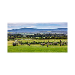 Chandon Yarra Valley View 1x2 Panorama - Unframed Canvas or Poster