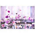 Garden Flowers Colour - Laminated Poster A3