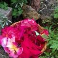 Rose & Lavender Balm
