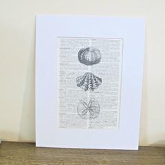 Beach Sea Shells Art Print Decor Seashells Illustrated Artwork Black and White
