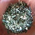 Immuni-TEA Herbal Infusion