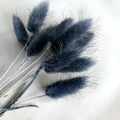 Black preserved pussy tails - 10 stems - bunny tails - Dried flowers - Grass