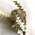 Dried banksia baxteri - 1 stem - Native - Flower