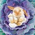2 Paper Napkins / Serviettes for Decoupage / Parties / Weddings - Cabbage Bunny