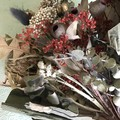 Pretty in Red - Dry bouquet - Dried flowers -35cm - Christmas in July - Banksia