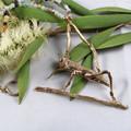 The Amazonite Cricket Necklace