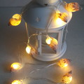 Shell fairy lights