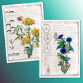 French Botanical Notes Printables