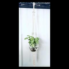 Ringed plant hanger