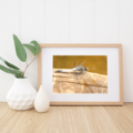 Dragonfly - A4 photographic print