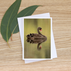Black Swan - Photographic Card #8