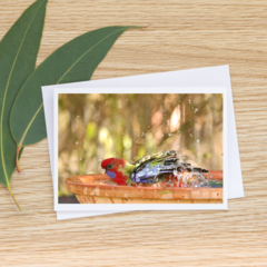 Juvenile Crimson Rosella - Photographic Card #21