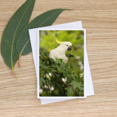 Sulphur-Crested Cockatoo in a Liquidambar -  Photographic Card #14