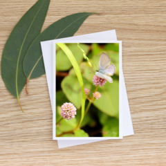 Common Grass Blue Butterfly  - Photographic Card #20