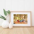 Juvenile Crimson Rosella having a bath - A4 photographic print